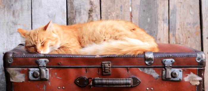 Kat slaapt op een koffer