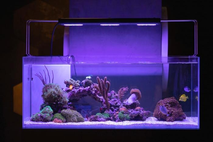 Aquarium met blauw licht