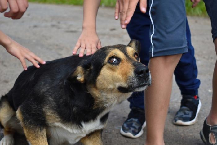 Bange hond wordt geaaid door kinderhanden