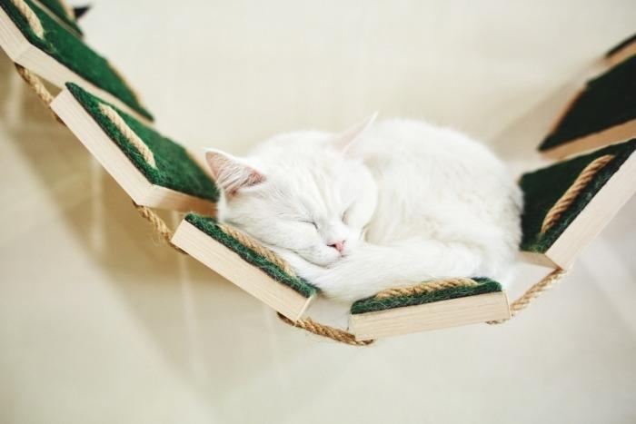 Kat op hangmat aan de muur