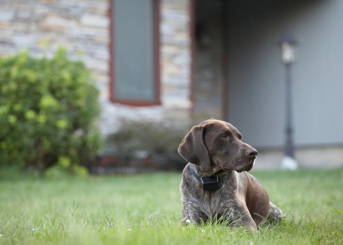 Hond ligt in tuin met onzichtbare omheining