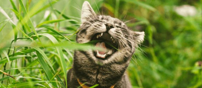 Kitten eet gras