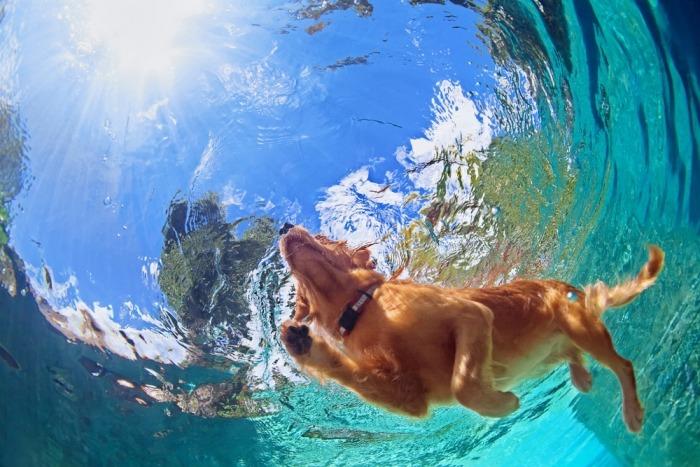 Zwemmende hond gefotografeerd onder water