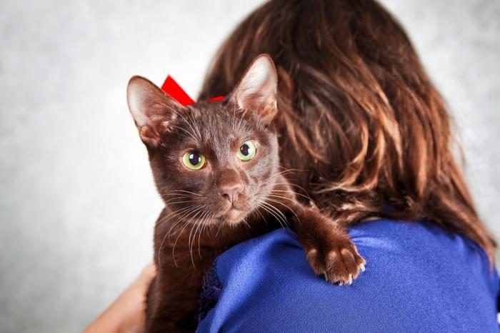 Havana brown ligt op de schouder van een vrouw met bruin haar.