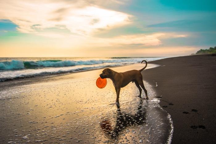 Hond staat op het strand