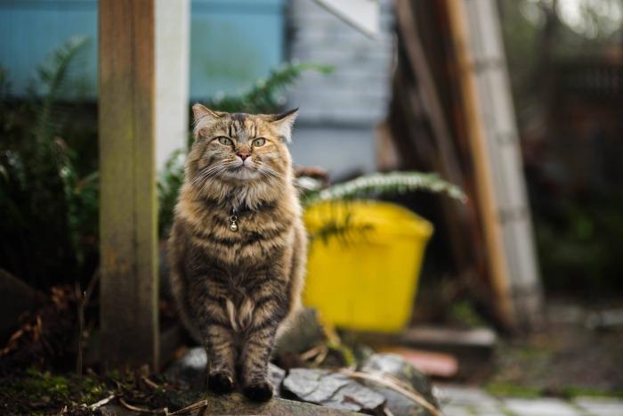 Bruine kat met zwarte strepen buiten huis