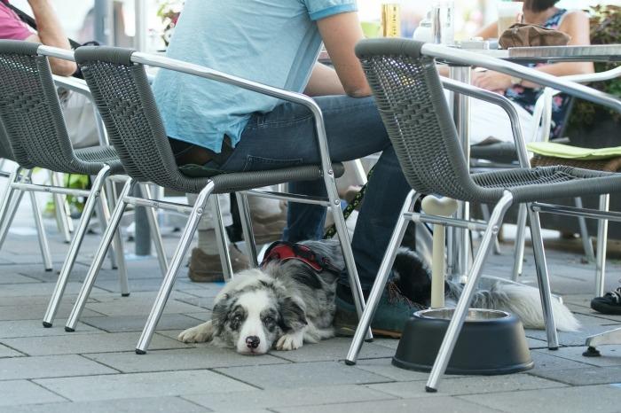 Hond ligt aangelijnd op terras van café