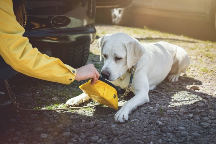 Hond drinkbak reizen