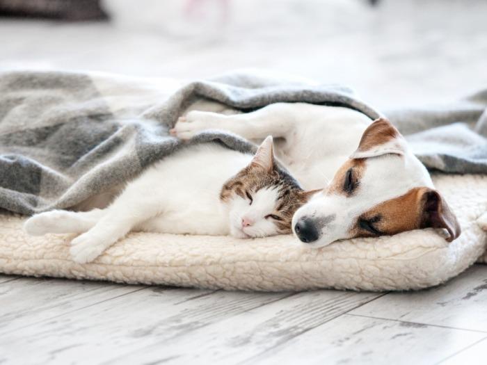 Hond en kat slapen samen
