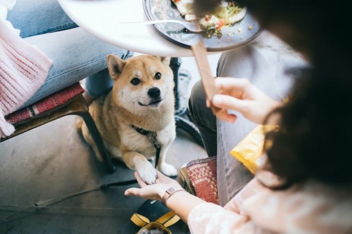 Hond krijgt snack onder tafel