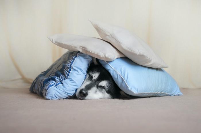 Hond verstopt onder kussens