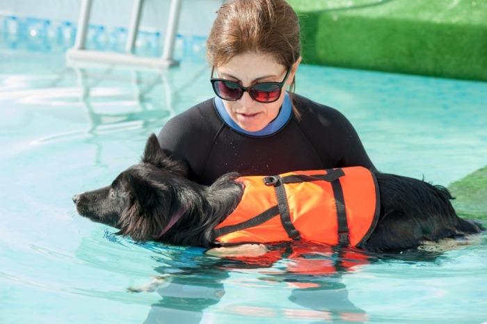 Hondentrainer leert hond zwemmen in zwembad