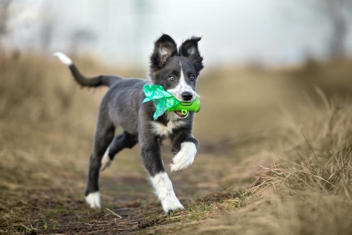 Hond met poepzakjes