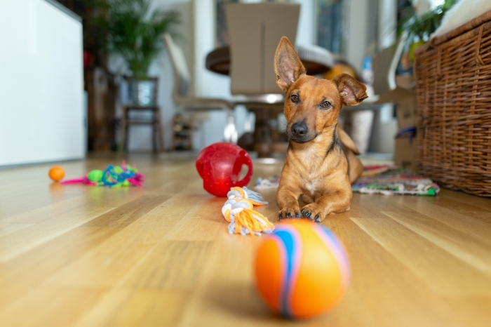 Hond met speelgoedjes