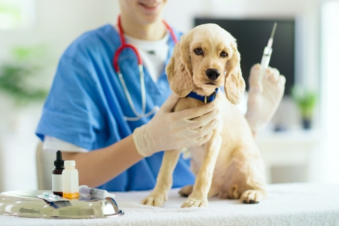 Hond vaccinatie