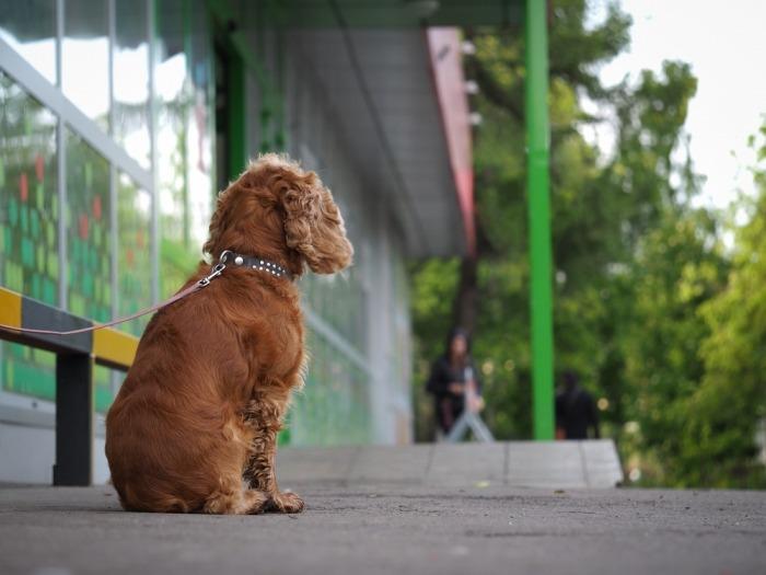 Hond wacht buiten op baasje