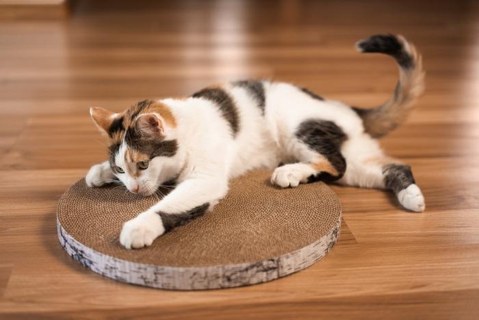 Kat krabt aan karton
