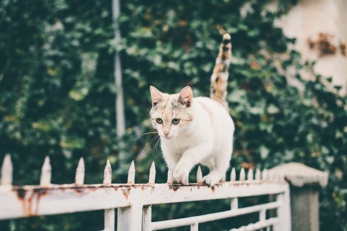 Kat loopt behoedzaam over puntig hek
