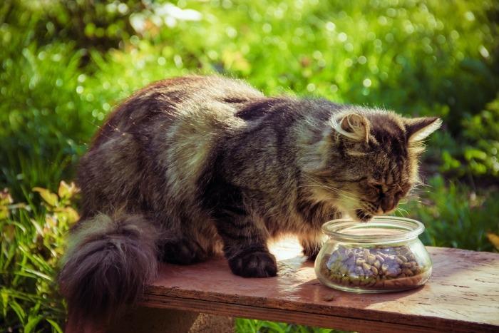 Kat eet brokjes uit kom