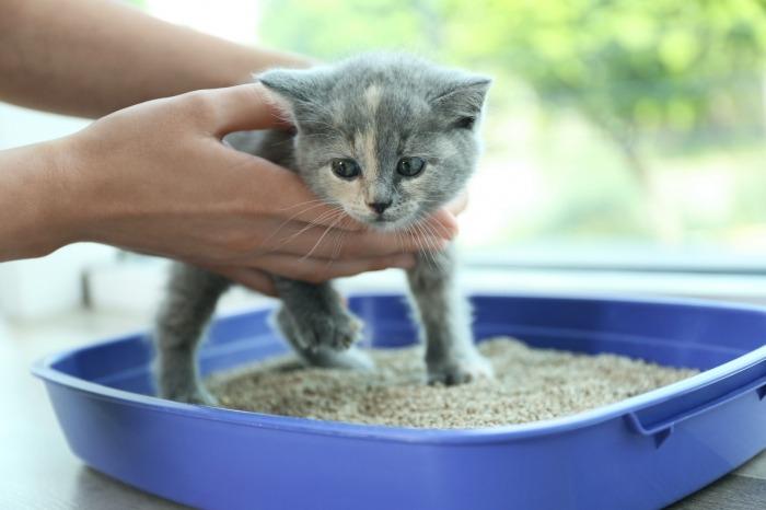 Kitten in kattenbak zetten