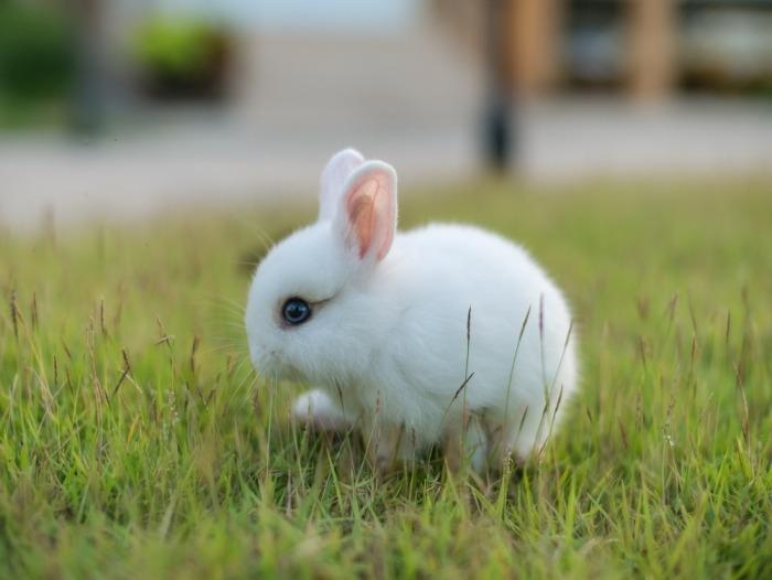 Een klein pooltje zit in het gras