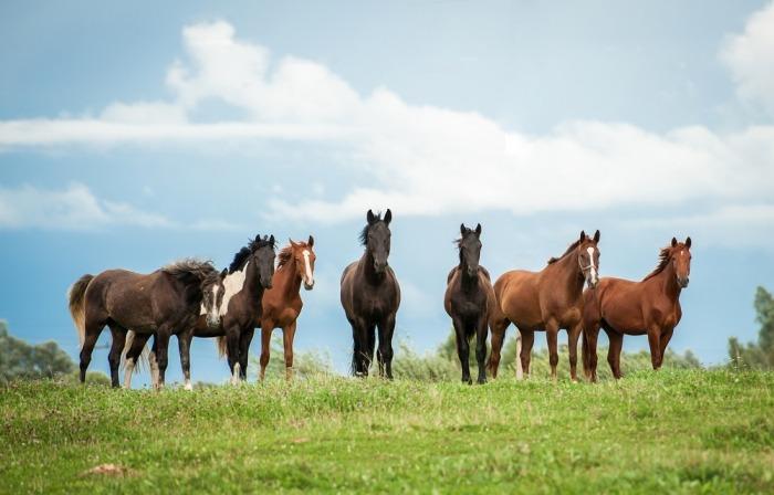 Kudde paarden in een weide
