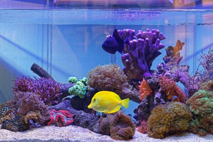 Aquarium met levend zand op de bodem