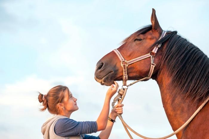 Meisje kriebelt bruin paard onder kind