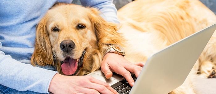 Hond kijkt mee op de laptop.