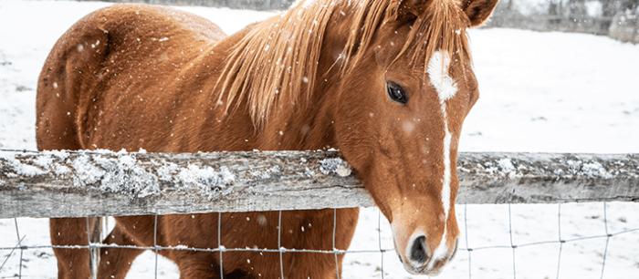 Paard in staat in de wei
