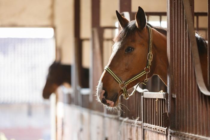 Paarden in een overdekte stal