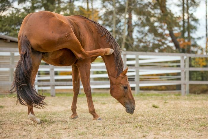 Paard krabt zichzelf