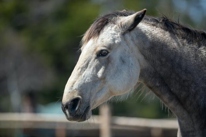 Paard legt oren plat