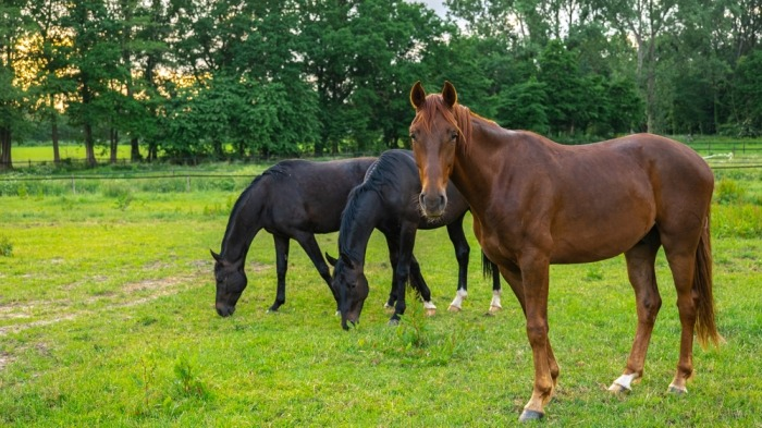 Drie paarden in een weide