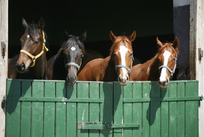 Vier paarden achter staldeur