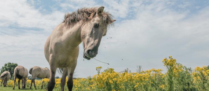 Paard in de wij