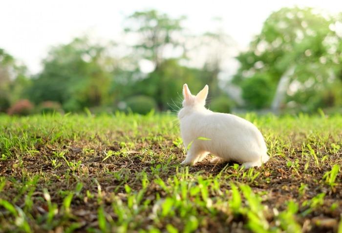 Een pooltje zit in een groot grasveld