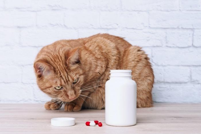 Rosse kat kijkt naar geopend pillenpotje