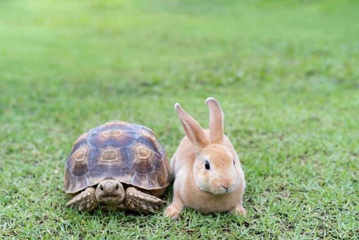 Schildpad naast konijn in het gras