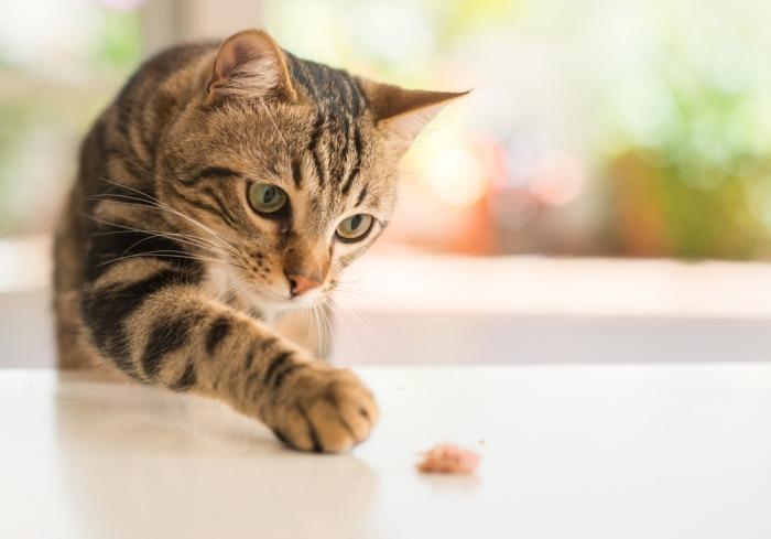 Kat speelt met wat voedsel