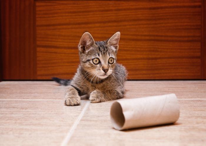 Kat met lege rol wc-papier