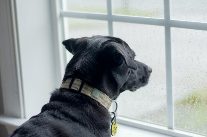 Hond kijkt door raam naar buiten