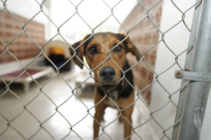 Hond in het asiel
