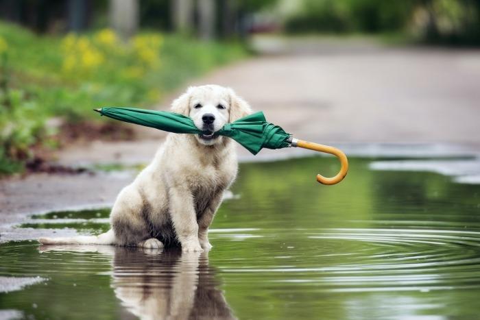 Puppy met paraplu in bek