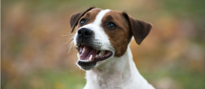 Hond lacht