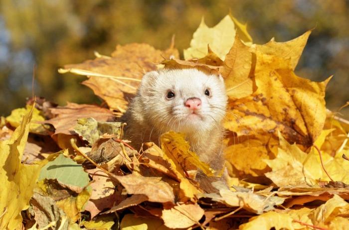 Fret in berg bladeren