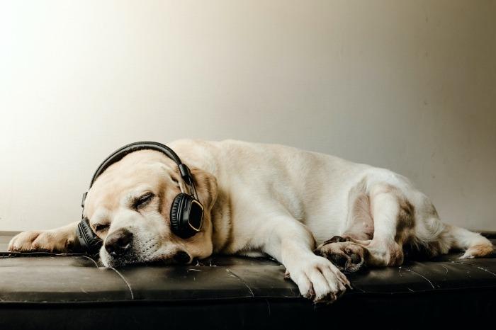Slapende hond met hoofdtelefoon