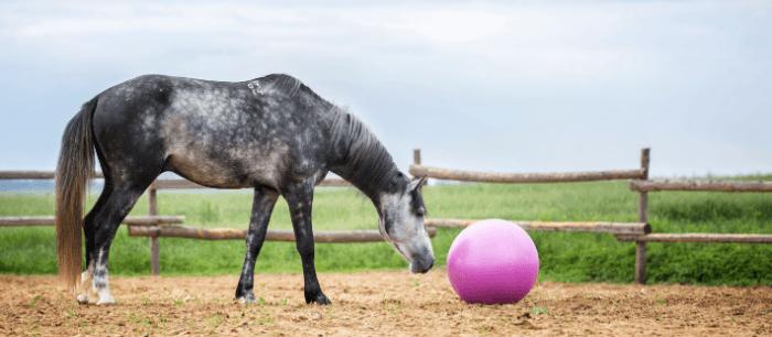 Paard met bal