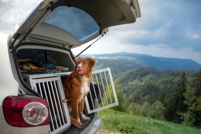 Stevige, metalen hondenbench met toller in auto