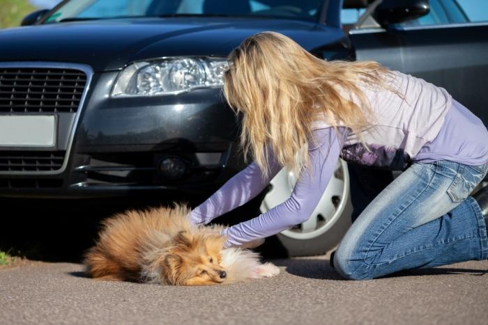 Vrouw helpt hond na aanrijding